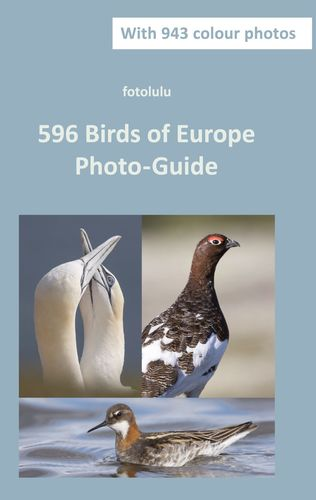 596 Birds of Europe