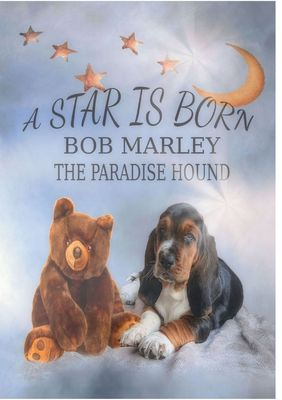 A Star is born - Bob Marley the Paradise Hound