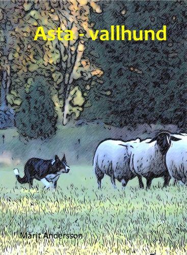 Asta - vallhund