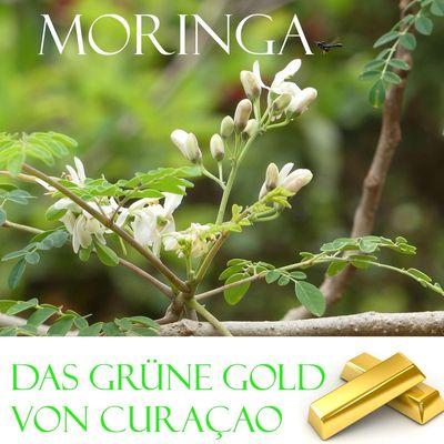 Das grüne Gold von Curacao