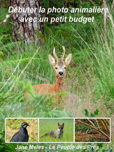 Débuter la photo animalière avec un petit budget