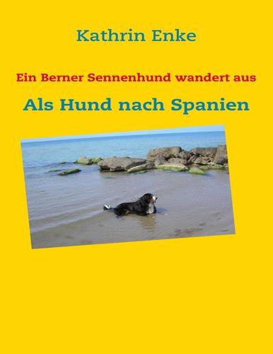 Ein Berner Sennenhund wandert aus