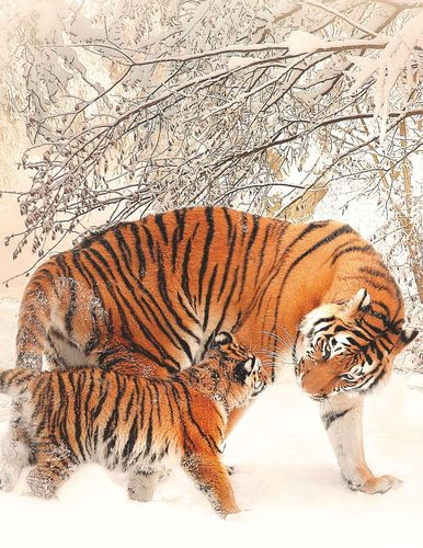 Fantasy Notizbuch 14: Tiger im Schnee