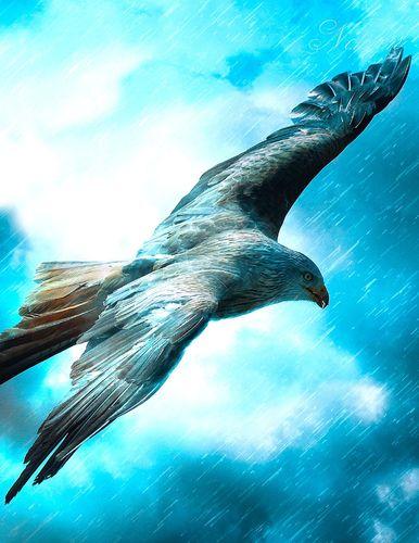 Fantasy Notizbuch: Adler im Sturm - weiße Seiten mit Eckmotiv
