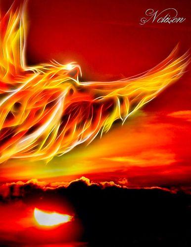 Fantasy Notizbuch: Phoenix - weiße Seiten mit Eckmotiv