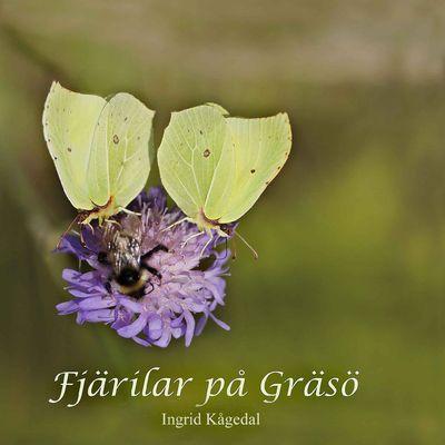Fjärilar på Gräsö
