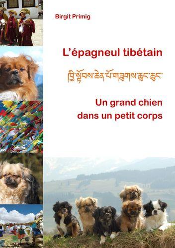 L'épagneul tibétain
