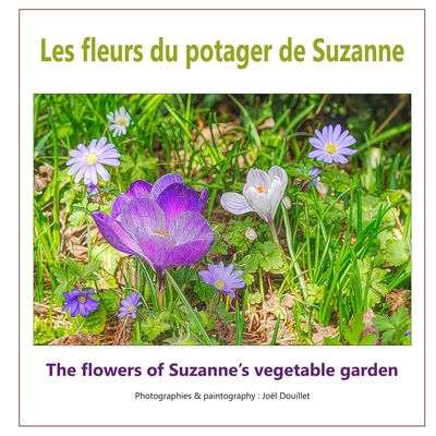 Les fleurs du potager de Suzanne