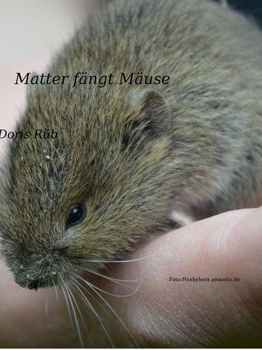 Matter fängt Mäuse
