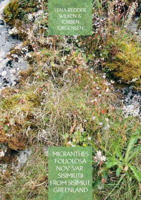 Micranthes foliolosa nov. var. sisimiutii  from Sisimiut, Greenland