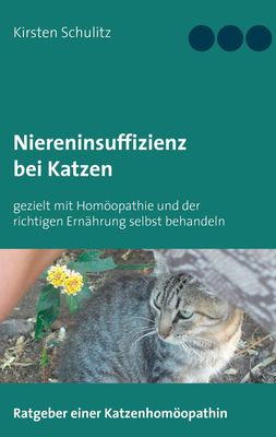 Niereninsuffizienz bei Katzen