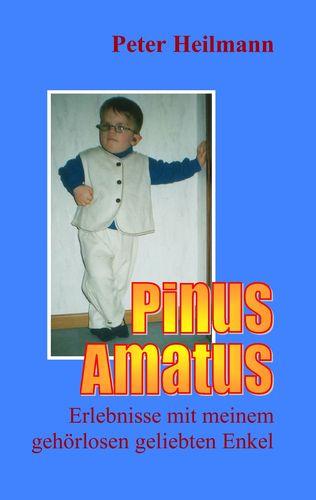 Pinus Amatus