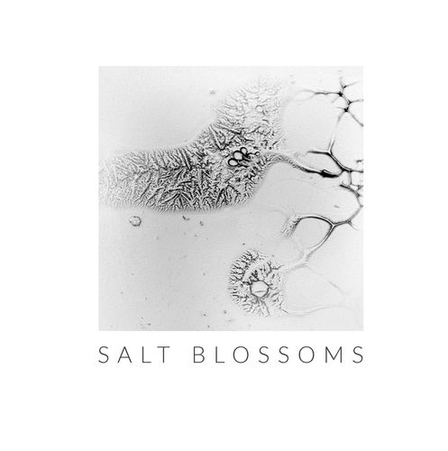 Salt Blossoms