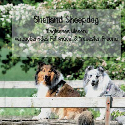 Shetland Sheepdog - Magisches Wesen, bezauberndes Fellknäuel und treuster Freund