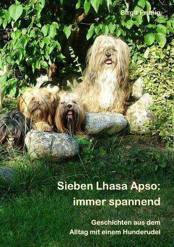 Sieben Lhasa Apso: immer spannend