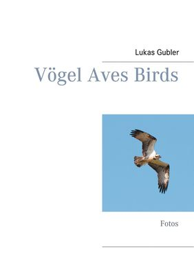Vögel Aves Birds